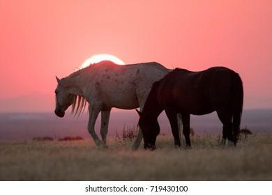 Wild horses in crimson sunset along Pony Express