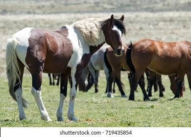 Wild horses in the desert
