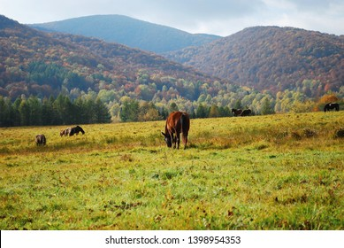 Wild horses in Eastern Europe. Bieszczady National Park