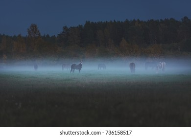 Wild horses eating grass in meaddow covered in fog. Dusky and gloomy weather surrounds the field covered with green grass. An evening feast right after the sunset.