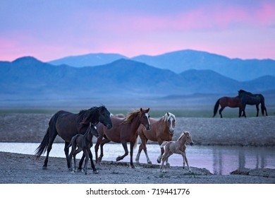 Wild horses families at watering hole at colorful sunrise