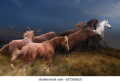 Wild horses gallop into the steppes