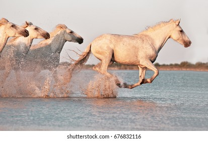 Wild horses galloping on water