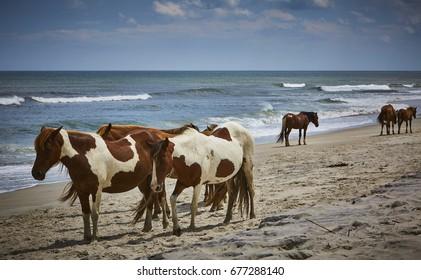 Wild Horses on the beach in Assateague Island