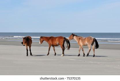 Wild horses on the beach at Cumberland Island, Georgia