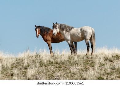 Wild Horses posing
