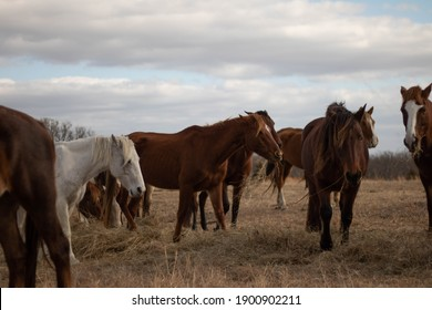 Wild Horses roaming the country