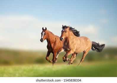 Wild horses running in the field in summer