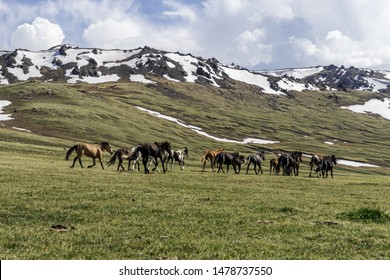 Wild horses running on the top of a mountain in Kyrgyzstan