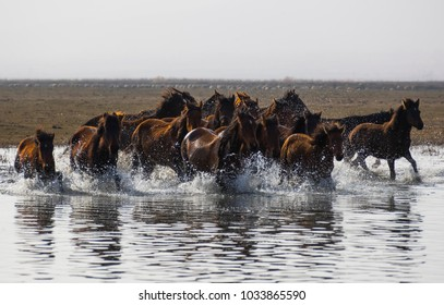 Wild Horses Running at Sea