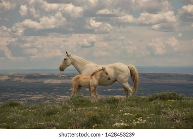 Wild Horses Of Sandwash Basin In Colorado Mare With Colt Against Beautiful View Off Lookout Mountain