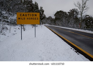 Wild Horses Sign In The Snow