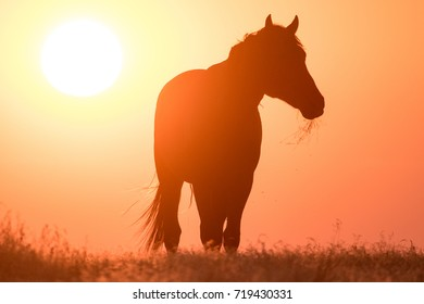 Wild horses silhouetted against an orange sky