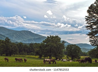 Wild Horses in the Smoky Mountains