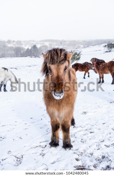wild horses in snow covered landscape