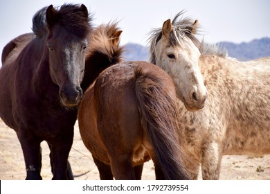 wild horses spotted in Mongolia