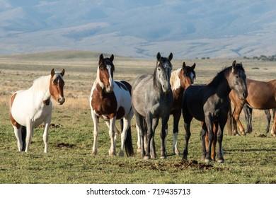 Wild horses standing in green desert landscape