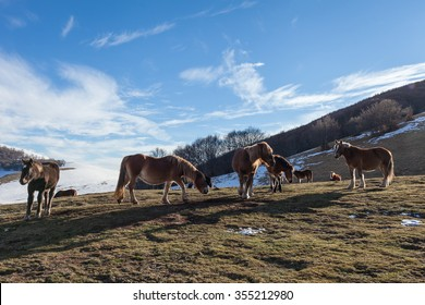 Wild horses standing in a prairie. Snowy mountains background, blue sky with clouds
