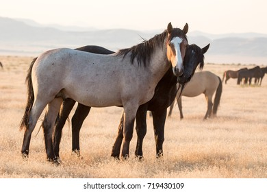 Wild horses standing together