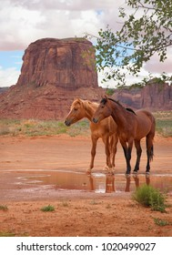 wild horses standing together at a watering hole