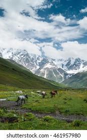 Wild horses in Svaneti, Georgia.  Shkhara (5193 m) in the background