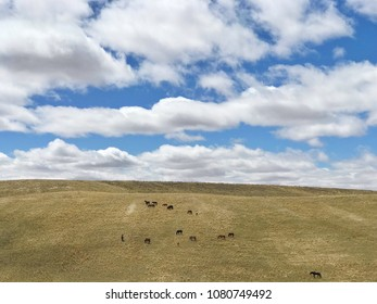 Wild horses under a big Wyoming sky. Big puffy white clouds.