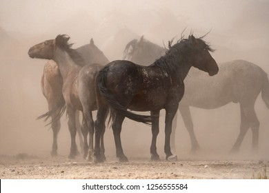 Wild Horses in the Utah desert along the Pony Express Trail
