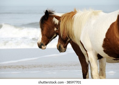 Wild Horses walking the Beach at Assateague Island, Maryland