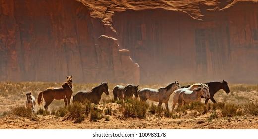 Wild horses walking through the desert in the Monument Valley area of Utah