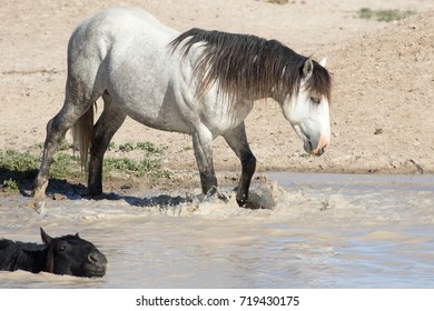 Wild horses at watering hole