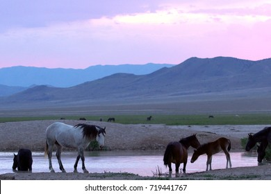 Wild horses at watering hole at colorful sunrise