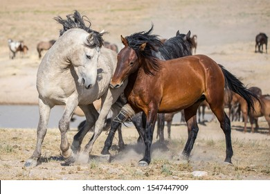 Wild Horses in the West Desert of Utah