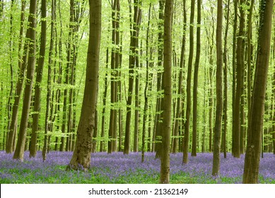 Wild hyacinths in the forest do show a beautiful view.