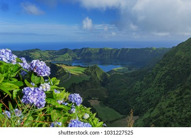 Wild hydrangeas flowers over Lake of Seven Cities, Azores Island, Portugal