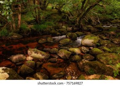 Wild Irish Creeks