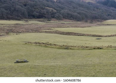 Wild Irish Fallow Deer Grazing in Wicklow Mountains
