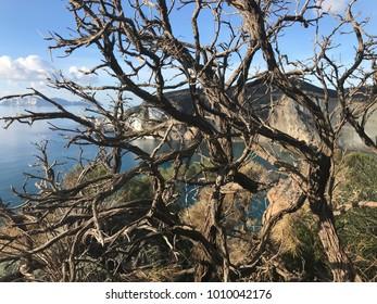 Wild island   tree and sea view