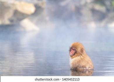 Wild Japanese macaque (Macaca fuscata), also known as the snow monkey soaking in hot spring pool at Jigokudani snow monkey park, Yamanouchi, Shimotakai District, Nagano Prefecture, Japan.