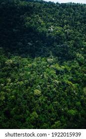 WIld Jungle in australian park