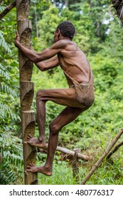 WILD JUNGLE, IRIAN JAYA, NEW GUINEA, INDONESIA - JUNE 10, 2016: Papuan of Korowai tribe climbs into the house on a tree. Tribe of Korowai (Kombai, Kolufo). June 10, 2016, New Guinea