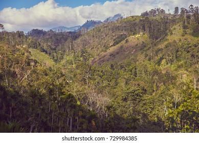 wild jungle in Sri Lanka, top view