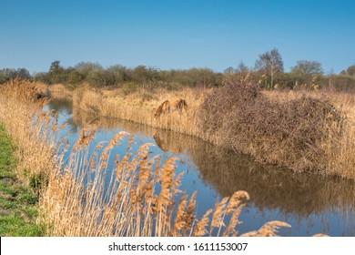 Wild Konik ponies on the banks of Burwell Lode waterway on Wicken Fen nature reserve, Cambridgeshire; England; UK - Shutterstock ID 1611153007