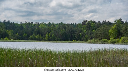 Wild lake in the forest  - Shutterstock ID 2001731228