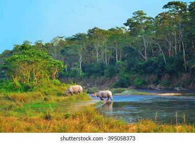 Wild landscape with asian rhinoceroses in CHITWAN , Nepal
