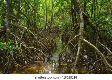 Wild landscape of Australian mangroves in Daintree National Park in the tropical north of Queensland, Australia