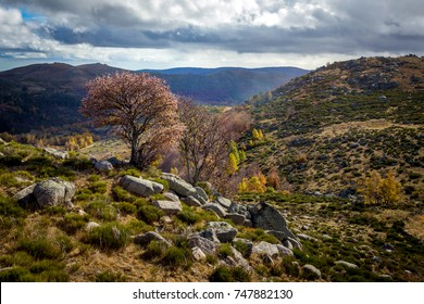 wild landscape in the Cevennes mountains with a pink tree in the middle of the rocks