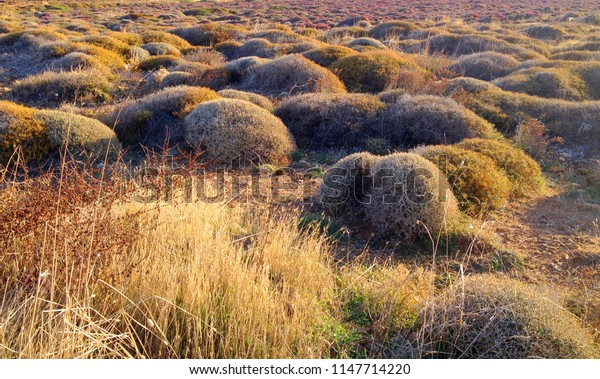 wild landscape that full of thorny plants