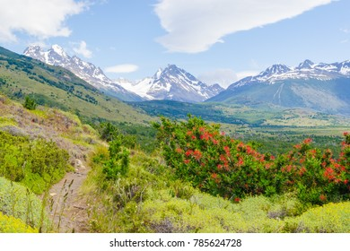 The wild landscape of torres del paine national park, in the patagonia region of chile,  with flower fields, rivers, forests and snow capped mountains
