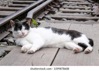 Wild Lazy Cat On Track