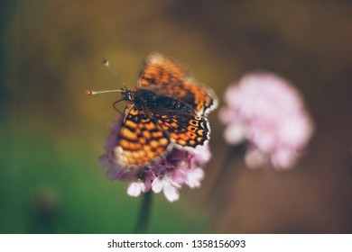 Wild life artistic picture. Flower with butterfly on nature background. Unfocused image with pastel colors. Dreamy concept